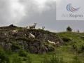 Icelandic Lamb / Исландская ягнятина ООО «АйсКорпо Рус»