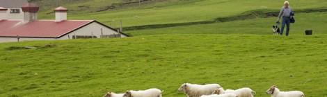 Исландия готова увеличить поставки в Россию мяса