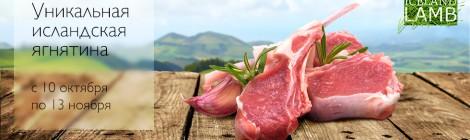 Почему мы выбираем мясо ягнят из Исландии?