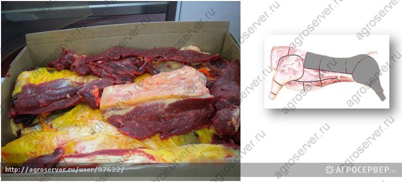 Мясо конины оптом